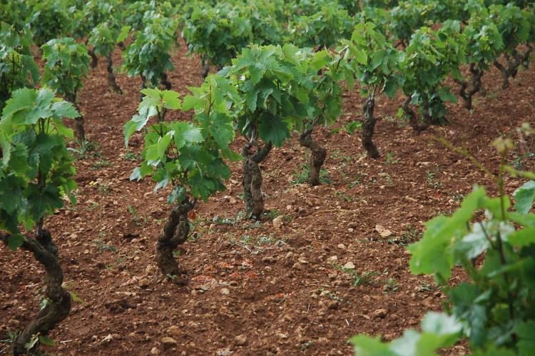 Vino Primitivo di Manduria